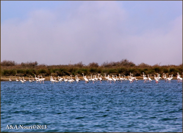 Flamingos' life story-4