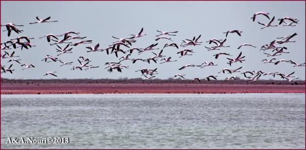 Flamingos' life story-25