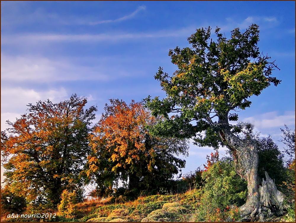 glory of Autumn-27