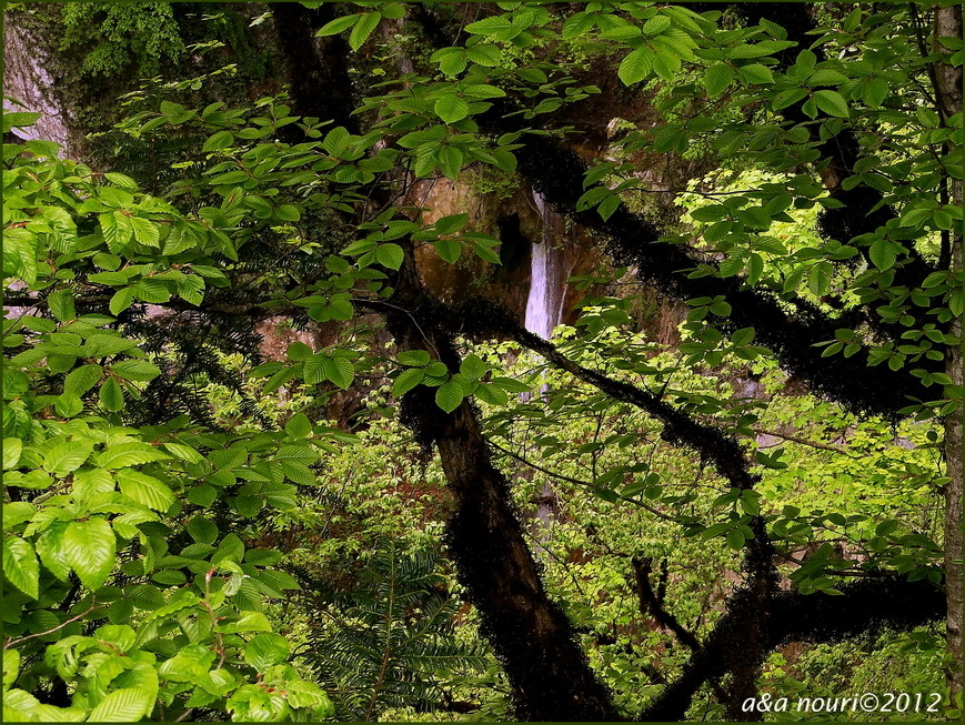 Waterfall in tree!