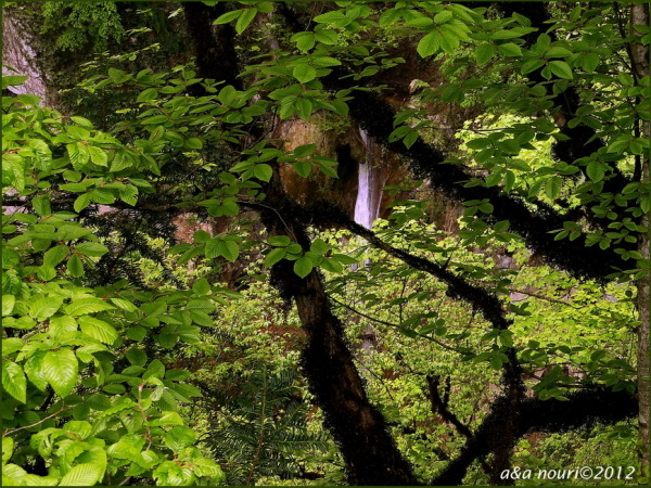 Waterfall in tree!