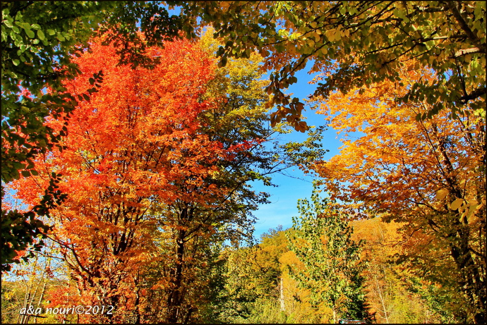 glory of Autumn-34