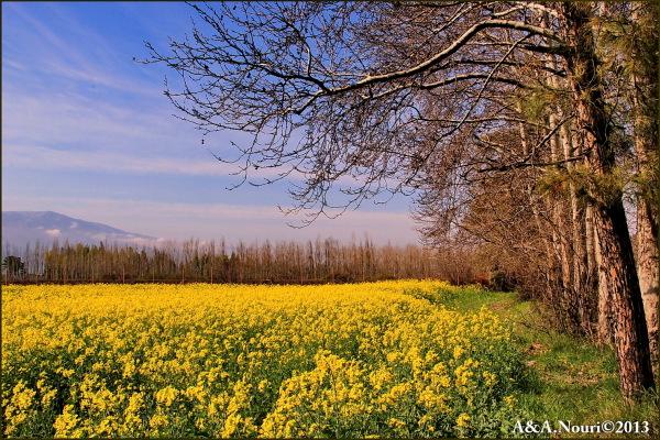secrets of yellow!