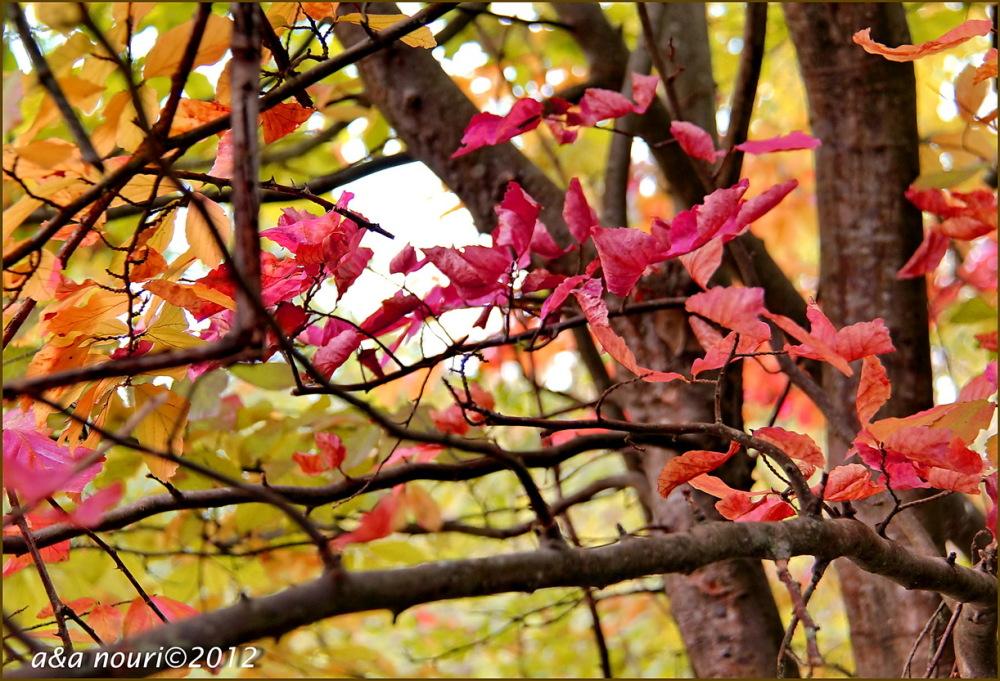 glory of Autumn-42