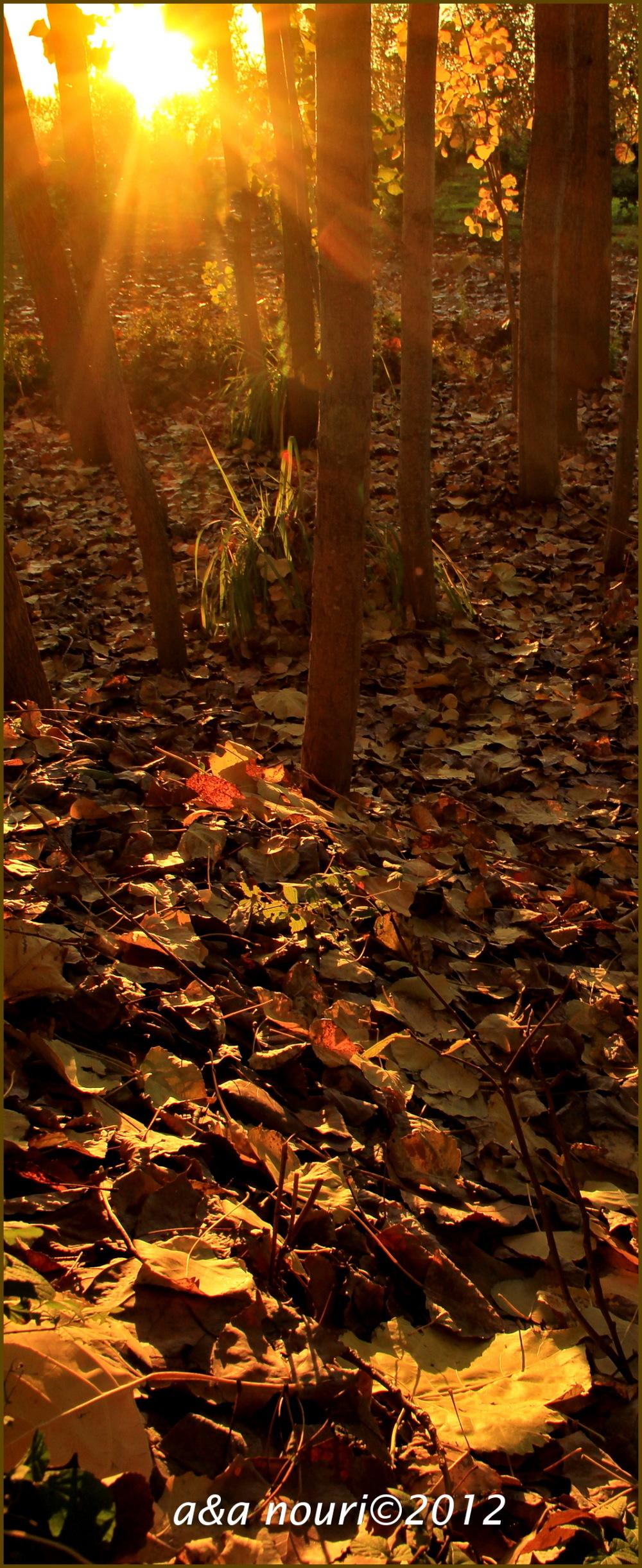 glory of Autumn-41