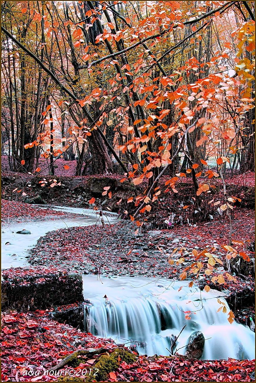Glory of autumn-47