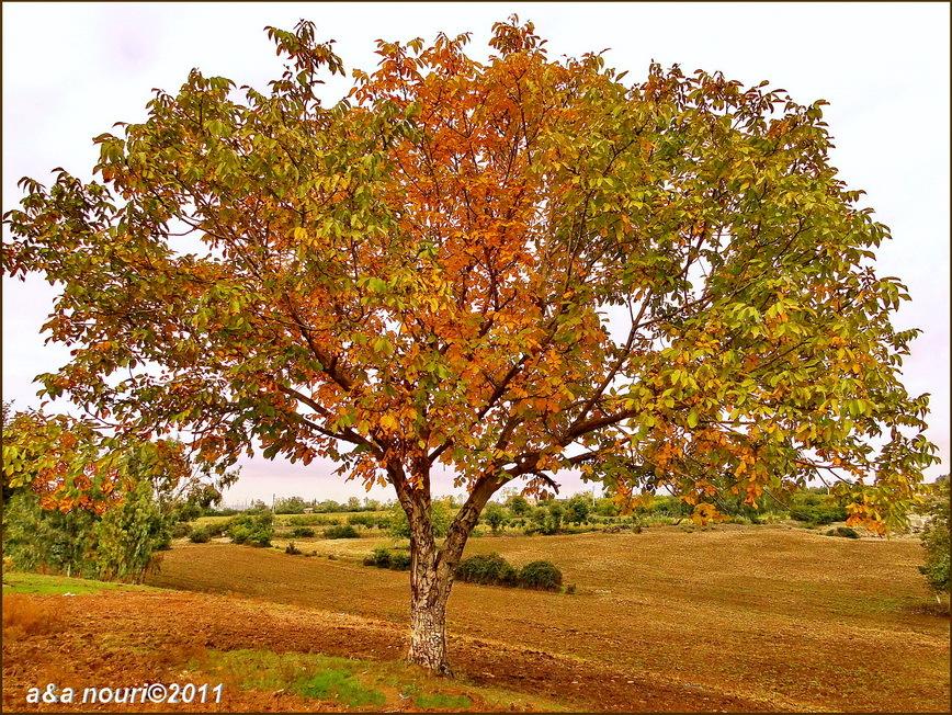 glory of Autumn-58