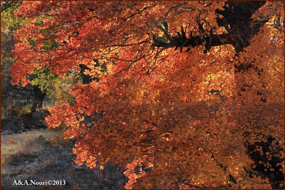 glory of Autumn-73