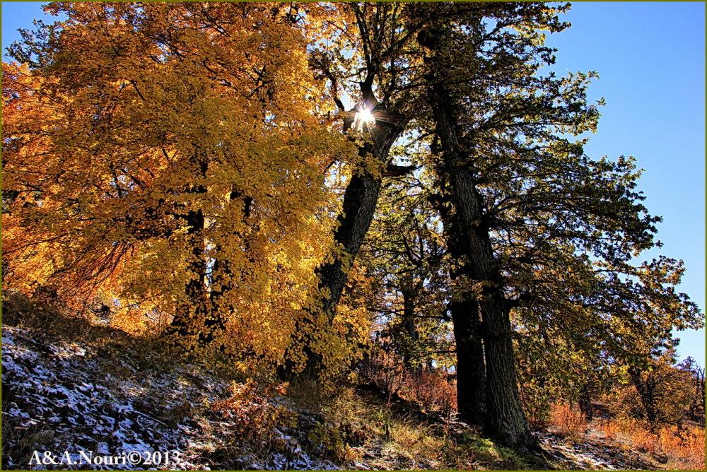 glory of Autumn-76