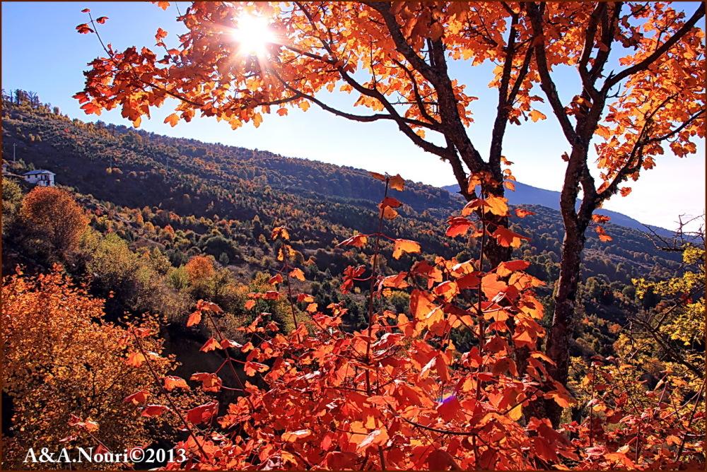 glory of Autumn-79