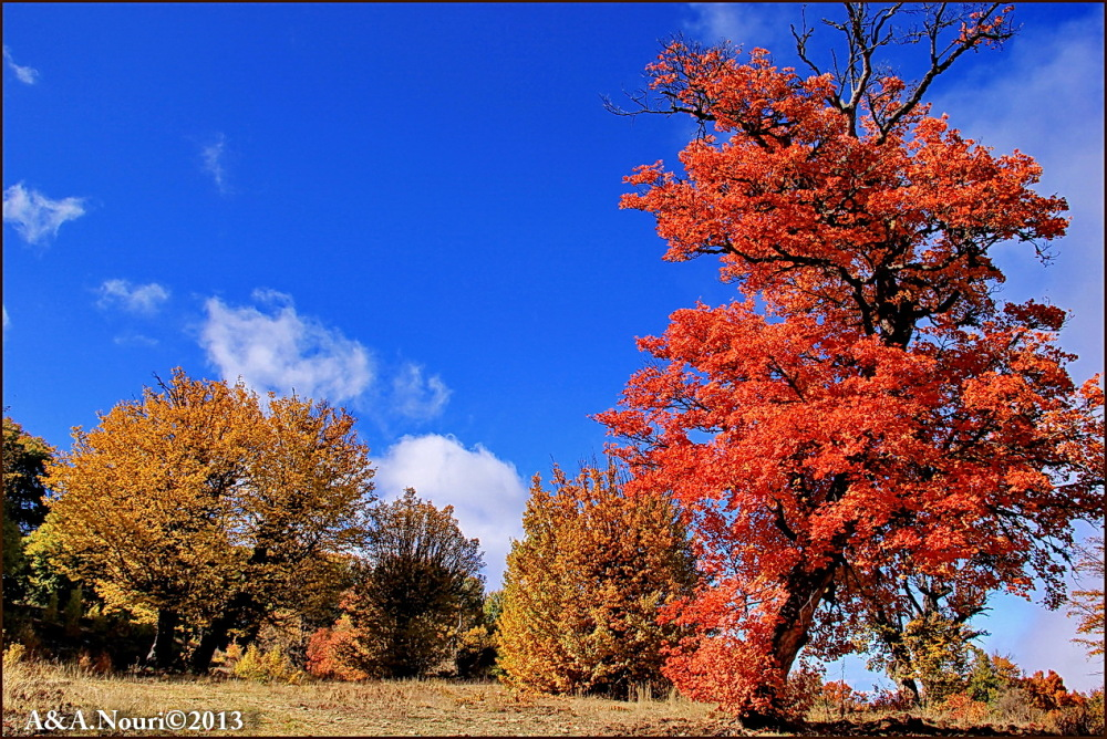 glory of Autumn-81
