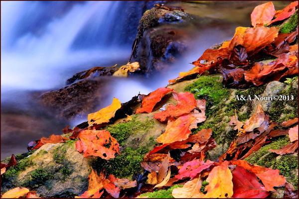 glory of Autumn-67