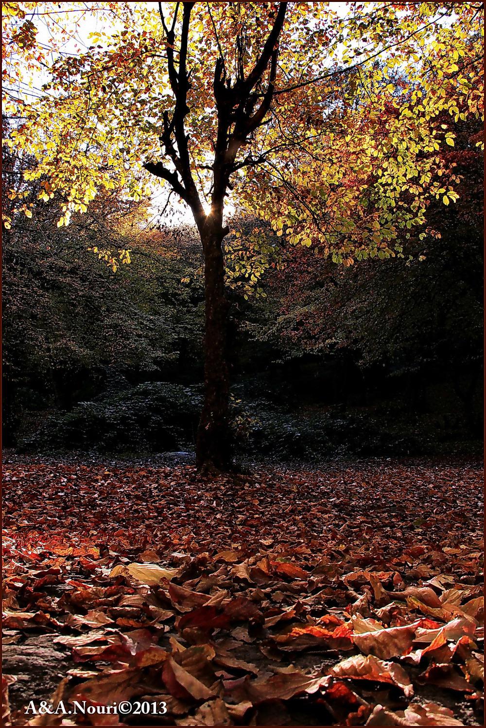 glory of Autumn-105