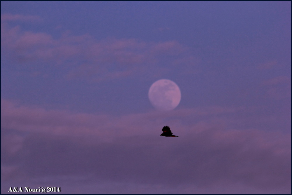 eagle and the moon