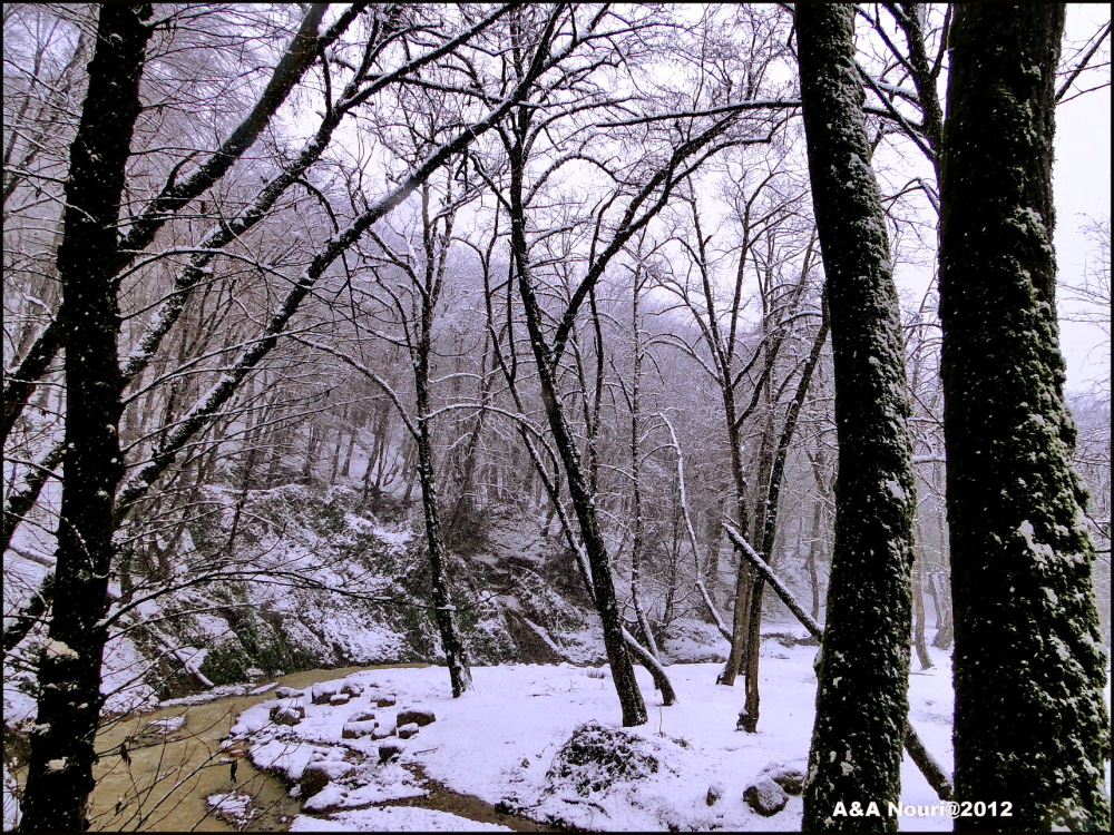 snowing on the trees