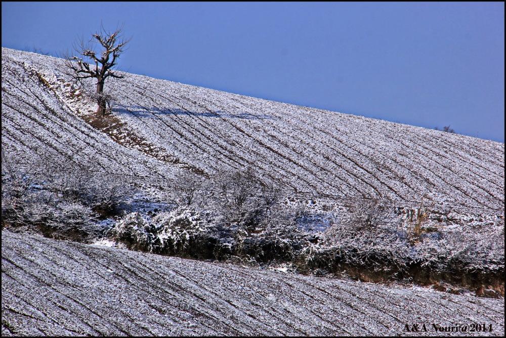 winter nobility