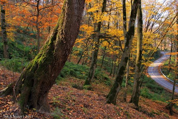 glory of Autumn-97