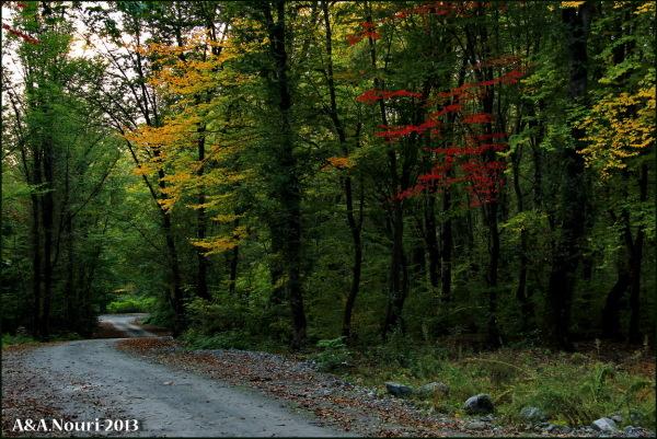glory of Autumn-106