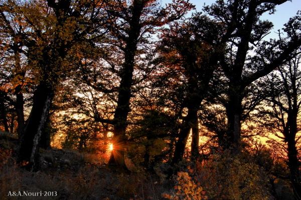 glory of Autumn-103