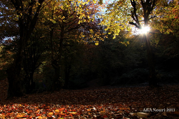 glory of Autumn-119