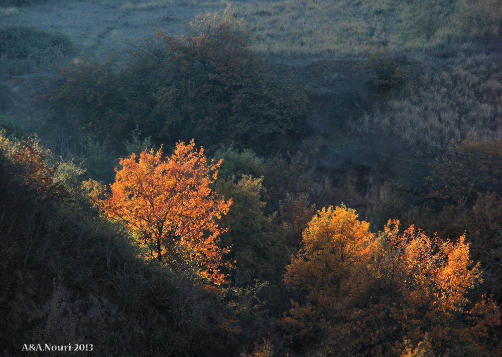 glory of Autumn-133