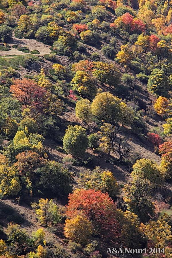 glory of Autumn-139