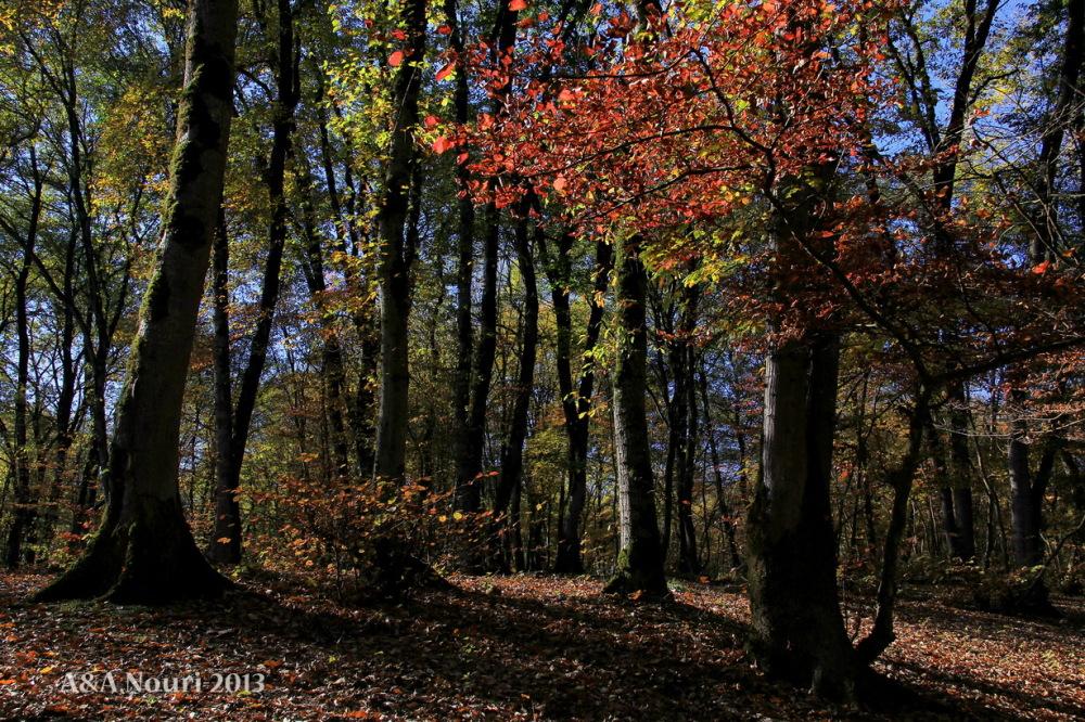 glory of Autumn-145