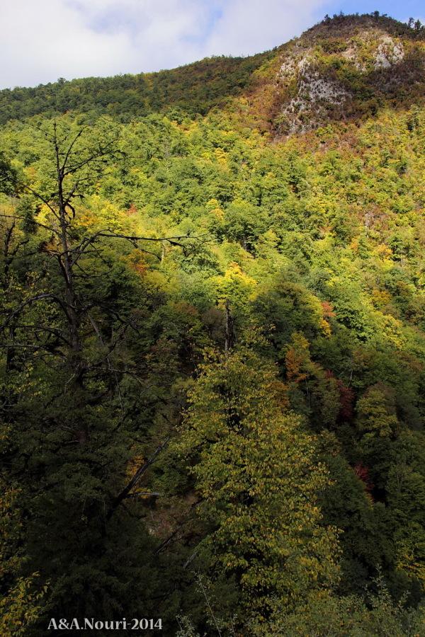 glory of Autumn-159