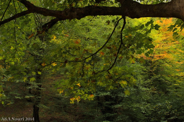 glory of Autumn-161