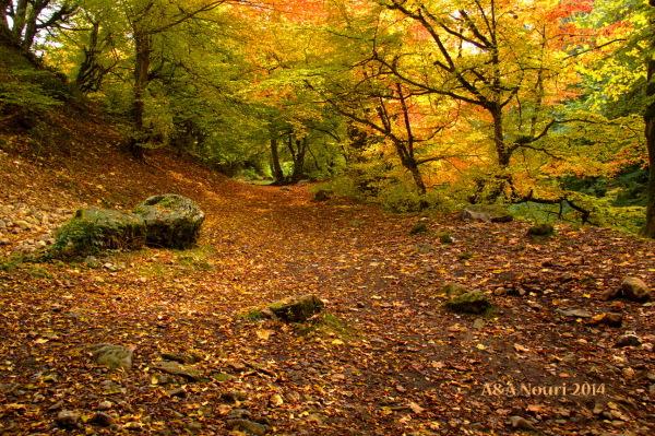 glory of Autumn-170