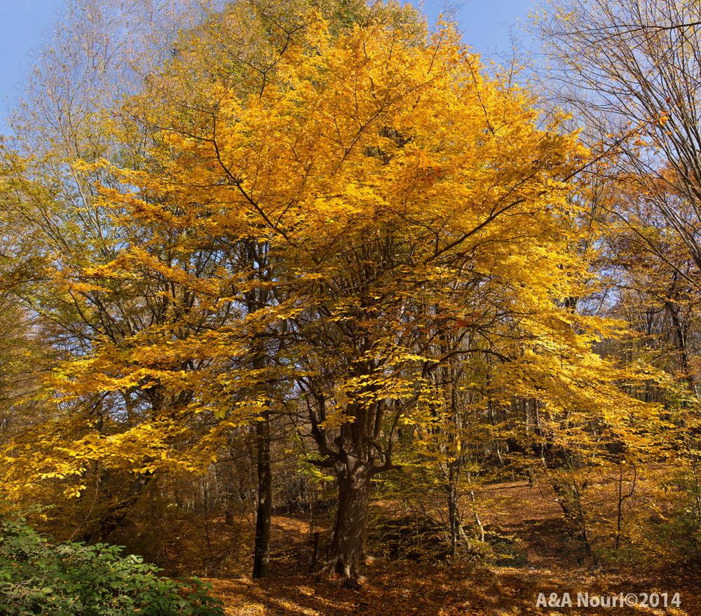 glory of Autumn-152