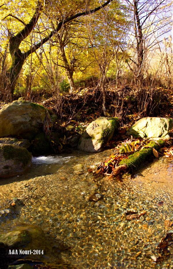 glory of Autumn-172