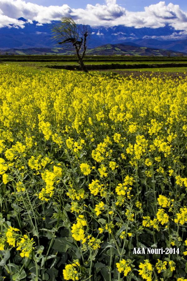 power of yellow
