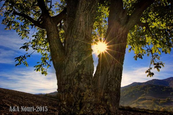 glory of a tree