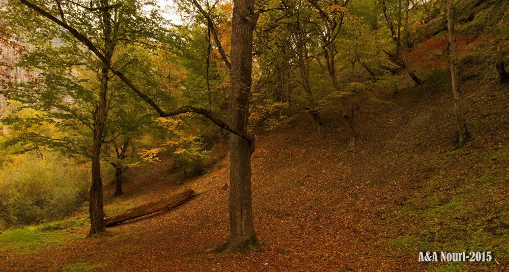Panorama of Autumn