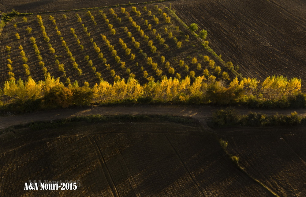 high view of Autumn