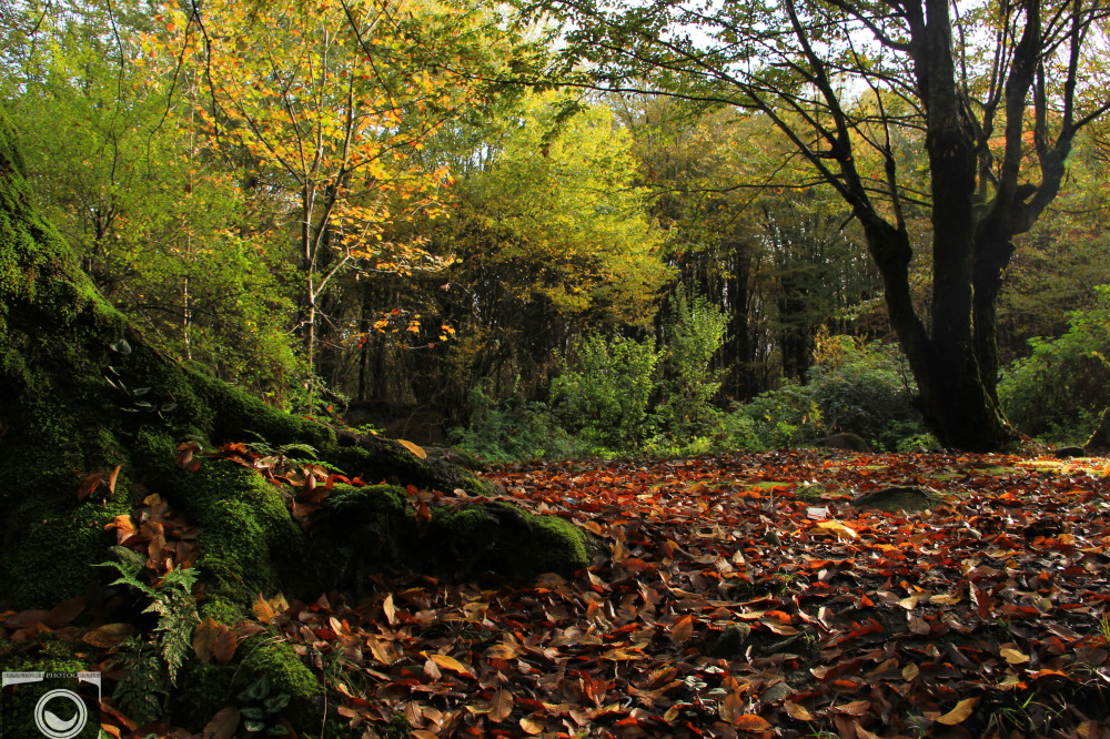 secrets of Autumn