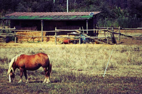 Horse in the backyard..