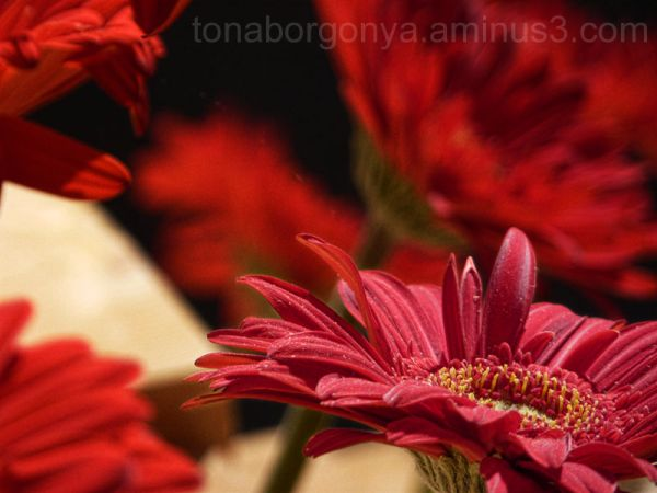 flor vermella