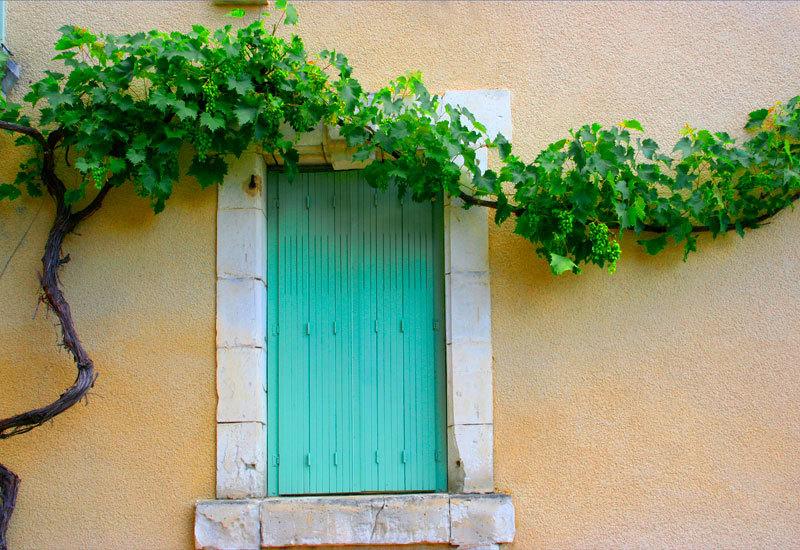 Vine above window
