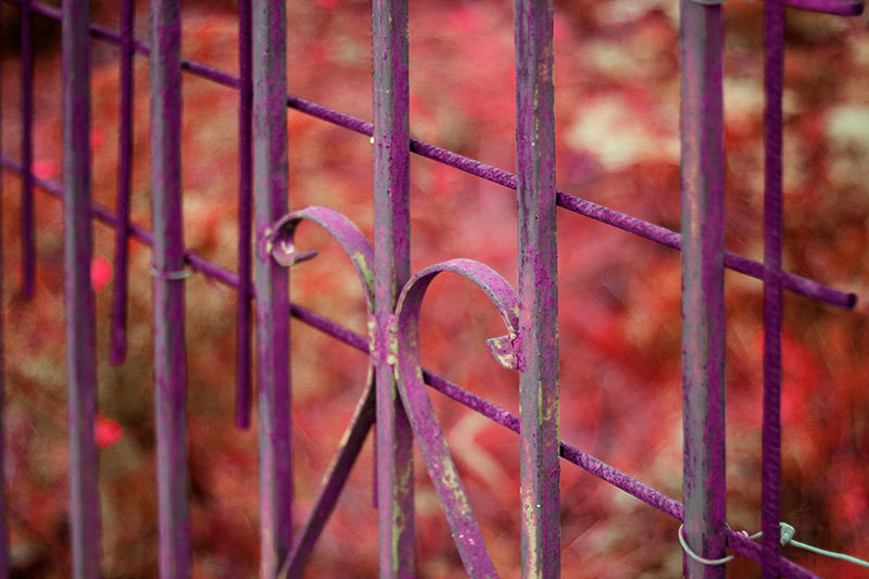 close up pink gate