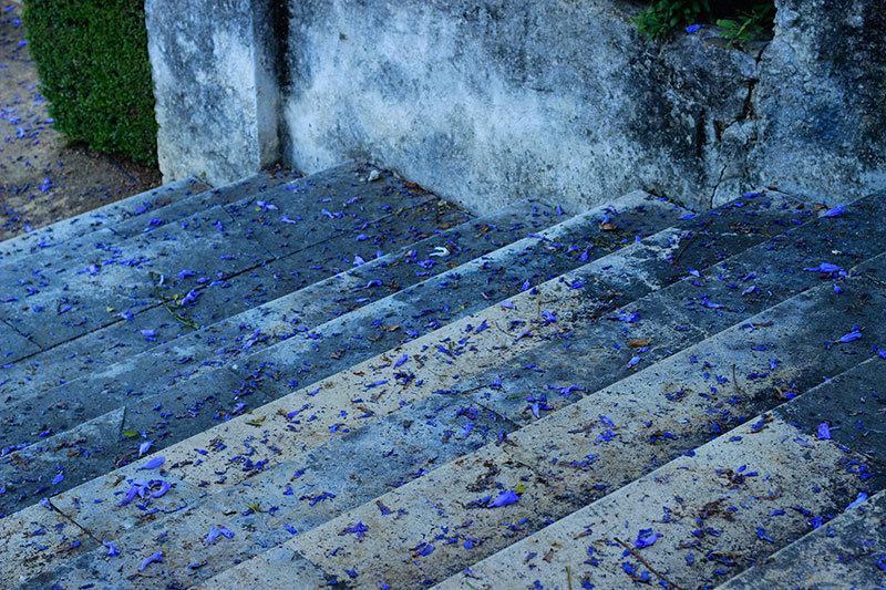 mauve jacaranda petals on stairs