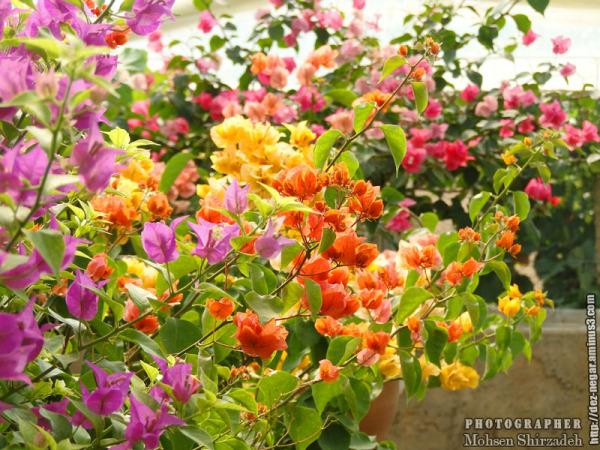 محلات - باغ گل