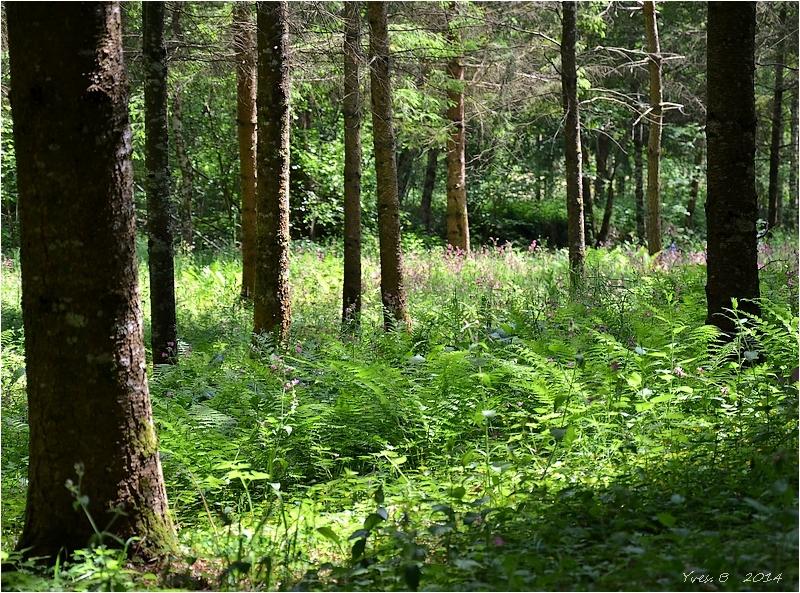 Dans l'intimité du bois