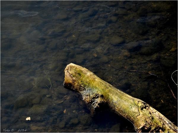 Bois flottant
