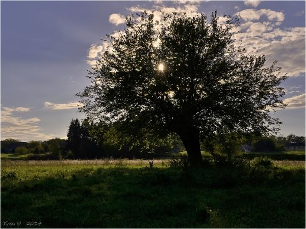 L'arbre ** (deuxième version)