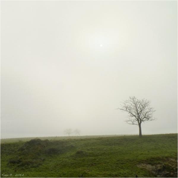 Une percée dans la brume