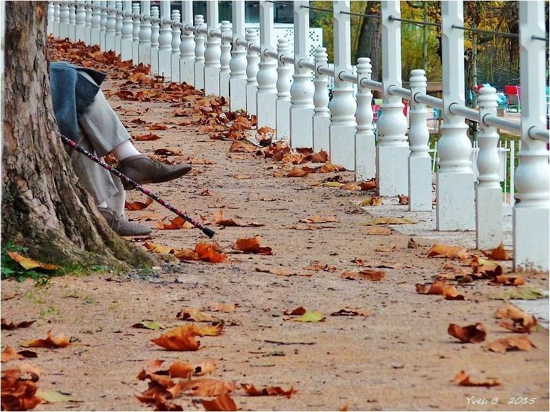 L'automne c'est le pied.