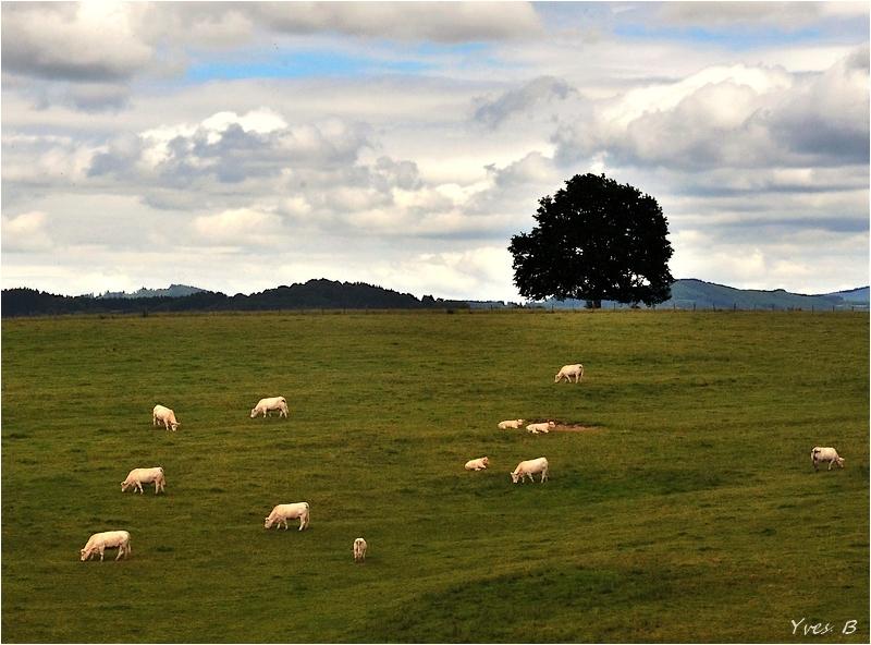 A la campagne...
