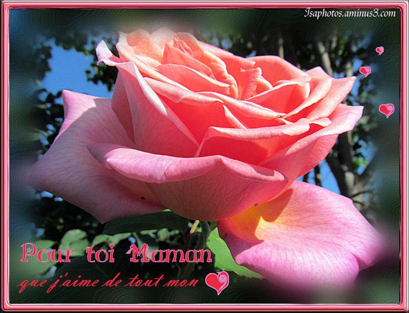 Bonne et Heureuse Fête à toutes les Mamans  ♥